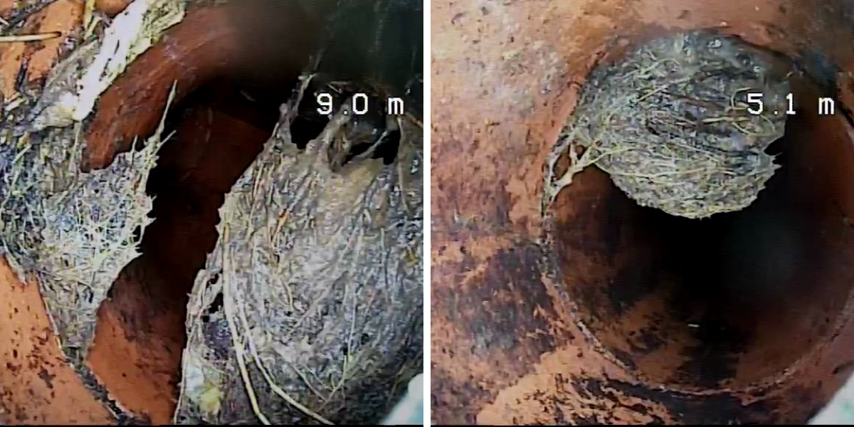 Looking at a sewer drain via CCTV to see tree root blockages